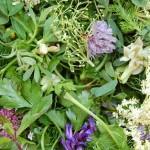Wildkräuter für grüne Smoothies