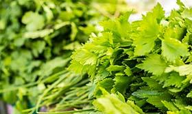 Grüne Kräuter und Pflanzen