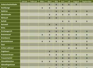 Ein Wildkräuter-Saisonkalender, der wertvolle Tipps für das Sammeln liefert