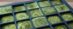 Grüne Smoothie Eiswürfel