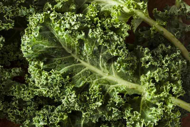 Grünkohl als gesunde Zutat für grüne Smoothies