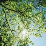 Baumblätter für grüne Smoothies